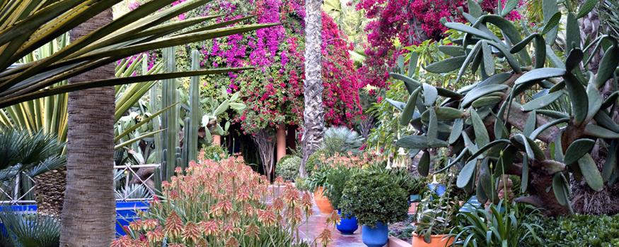 jardin-cactus